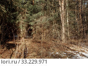 Купить «Early spring forest at sunny march day», фото № 33229971, снято 21 февраля 2020 г. (c) Julia Shepeleva / Фотобанк Лори