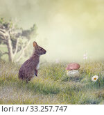 Cute Wild Rabbit. Стоковое фото, фотограф Svetlana Foote / PantherMedia / Фотобанк Лори