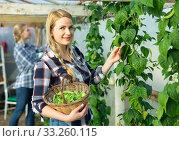 Купить «Woman gardening on broad beans beds», фото № 33260115, снято 28 февраля 2019 г. (c) Яков Филимонов / Фотобанк Лори
