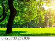 Купить «Летний парк в солнечный день. Summer landscape - colorful summer city park with deciduous green trees in sunny weather. Summer park trees», фото № 33269839, снято 6 июня 2019 г. (c) Зезелина Марина / Фотобанк Лори