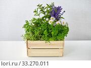 Купить «green herbs and flowers in wooden box on table», фото № 33270011, снято 12 июля 2018 г. (c) Syda Productions / Фотобанк Лори