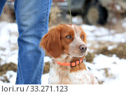 Купить «Spaniel dog next to the owner's legs close-up», фото № 33271123, снято 15 февраля 2020 г. (c) Яна Королёва / Фотобанк Лори