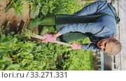 Купить «Young woman gardener in apron with mattock working with Malabar spinach in hothouse», видеоролик № 33271331, снято 8 апреля 2020 г. (c) Яков Филимонов / Фотобанк Лори