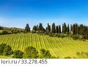 Купить «View of the vineyards of Tuscany on a Sunny spring day. Italy», фото № 33278455, снято 11 мая 2014 г. (c) Наталья Волкова / Фотобанк Лори
