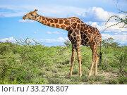 Купить «Giraffe», фото № 33278807, снято 6 февраля 2020 г. (c) Art Konovalov / Фотобанк Лори