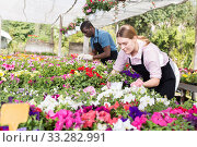 Florist girl working in greenhouse. Стоковое фото, фотограф Яков Филимонов / Фотобанк Лори