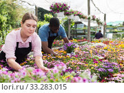 Florists working in greenhouse. Стоковое фото, фотограф Яков Филимонов / Фотобанк Лори