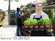 woman working in glasshouse, carrying crate with seedlings. Стоковое фото, фотограф Яков Филимонов / Фотобанк Лори