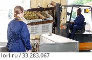 Woman controlling unloading grapes at winery. Стоковое фото, фотограф Яков Филимонов / Фотобанк Лори