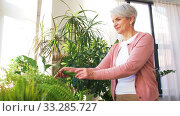 senior woman takes care of houseplant at home. Стоковое видео, видеограф Syda Productions / Фотобанк Лори