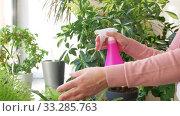 Купить «senior woman spraying houseplants at home», видеоролик № 33285763, снято 19 января 2020 г. (c) Syda Productions / Фотобанк Лори