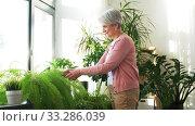 senior woman takes care of houseplant at home. Стоковое видео, видеограф Syda Productions / Фотобанк Лори