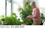 Купить «happy senior woman cleaning houseplant», видеоролик № 33286043, снято 19 января 2020 г. (c) Syda Productions / Фотобанк Лори