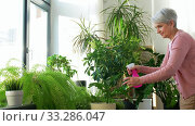 happy senior woman spraying houseplants at home. Стоковое видео, видеограф Syda Productions / Фотобанк Лори
