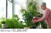 Купить «happy senior woman spraying houseplants at home», видеоролик № 33286047, снято 19 января 2020 г. (c) Syda Productions / Фотобанк Лори
