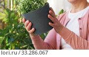 Купить «senior woman takes care of houseplants at home», видеоролик № 33286067, снято 18 февраля 2020 г. (c) Syda Productions / Фотобанк Лори