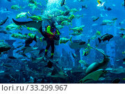 DUBAI, UAE - SEPTEMBER 30: Large aquarium in Hotel Atlantis (1,539 spacious guest rooms including 166 suites) on man-made island of Palm Jumeirah at September 30, 2012 in Dubai, United Arab Emirates. Стоковое фото, фотограф Zoonar.com/Figurniy Sergey / age Fotostock / Фотобанк Лори