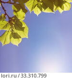 green leaves in summer. Стоковое фото, фотограф Stefan Papp / PantherMedia / Фотобанк Лори