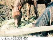 beautiful bay horse in stall. Стоковое фото, фотограф Татьяна Яцевич / Фотобанк Лори