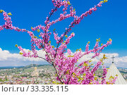 Купить «Cercis tree in bloom with blue sky and  St. Nicholas church  on the territory of the ancient fortress Narikala, old Tbilisi, Georgia», фото № 33335115, снято 7 июля 2020 г. (c) Николай Коржов / Фотобанк Лори