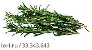 Купить «Green sprigs of rosemary on wooden surface», фото № 33343643, снято 4 апреля 2020 г. (c) Яков Филимонов / Фотобанк Лори
