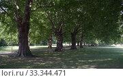 Купить «View of a beautiful green plane tree alley in Cambridge in sunny summer day, UK», видеоролик № 33344471, снято 21 августа 2019 г. (c) Ирина Мойсеева / Фотобанк Лори
