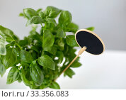 Купить «close up of basil herb with name plate in pot», фото № 33356083, снято 12 июля 2018 г. (c) Syda Productions / Фотобанк Лори