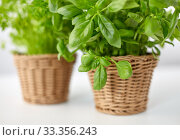close up of green basil herb in wicker basket. Стоковое фото, фотограф Syda Productions / Фотобанк Лори