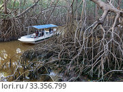 Купить «Tourist boat in Red Mangrove (Rhizophora mangle) forest, Ria Celestun Biosphere Reserve, Yucatan Peninsula, Mexico, January», фото № 33356799, снято 4 августа 2020 г. (c) Nature Picture Library / Фотобанк Лори