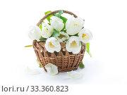 beautiful bouquet of white tulips on white background. Стоковое фото, фотограф Peredniankina / Фотобанк Лори