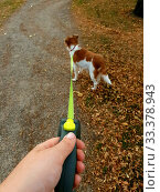 Купить «Owner walking with dog in the park. Obedient pet on a leash with his owner cute», фото № 33378943, снято 2 июня 2020 г. (c) easy Fotostock / Фотобанк Лори