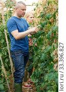 Serious couple of gardeners attentively looking seedlings. Стоковое фото, фотограф Яков Филимонов / Фотобанк Лори