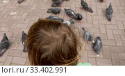 Child feeding pigeons with bread. Стоковое видео, видеограф Ekaterina Demidova / Фотобанк Лори