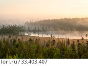 Colored sunrise in forest lake with fog, evergreen trees on bog. Northern Karelia, Russia. Стоковое фото, фотограф Кекяляйнен Андрей / Фотобанк Лори