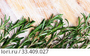 Купить «Green rosemary on wooden background, top view», фото № 33409027, снято 4 апреля 2020 г. (c) Яков Филимонов / Фотобанк Лори