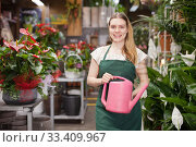 Купить «Woman florist working in floral shop; watering flowers from a plastic watering can», фото № 33409967, снято 20 мая 2019 г. (c) Яков Филимонов / Фотобанк Лори