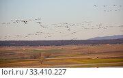 Large flock of cranes flying in sky. Стоковое фото, фотограф Яков Филимонов / Фотобанк Лори