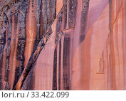 Petrified sand dunes with deeply eroded sinuous striations in sandstone basin. Colorado Plateau, Arizona, USA. September 2019. Стоковое фото, фотограф Jack Dykinga / Nature Picture Library / Фотобанк Лори
