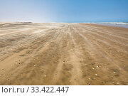 Strong winds over a wild beach, Northern Skeleton Coast National Park, Namibia, Atlantic coast. Стоковое фото, фотограф Christophe Courteau / Nature Picture Library / Фотобанк Лори