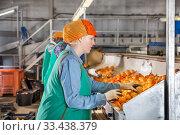 Female employee sorting mandarins on producing grading line. Стоковое фото, фотограф Яков Филимонов / Фотобанк Лори