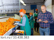 Serious owner of fruit warehouse checking work of female employees engaged in tangerines sorting. Стоковое фото, фотограф Яков Филимонов / Фотобанк Лори