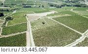 Купить «Aerial view of vineyard plantations in Spain», видеоролик № 33445067, снято 23 июля 2018 г. (c) Яков Филимонов / Фотобанк Лори