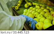 Hands of factory worker checking ripe apples on conveyor belt of sorting production line. Стоковое видео, видеограф Яков Филимонов / Фотобанк Лори