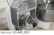 Купить «Process of making bread dough in industrial kneading machine in small bakery», видеоролик № 33445203, снято 10 июля 2020 г. (c) Яков Филимонов / Фотобанк Лори