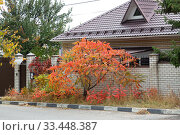 Купить «Saratov, Russia - 05/10/2019: Autumn city landscape, a residential building by the road behind a fence, a brick cottage with a gate, a gate and a Rhus tree with bright yellow orange foliage in the garden», фото № 33448387, снято 5 октября 2019 г. (c) Светлана Евграфова / Фотобанк Лори