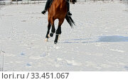 Купить «Horse riding - a rider galloping on a horse in a circle», видеоролик № 33451067, снято 4 июня 2020 г. (c) Константин Шишкин / Фотобанк Лори
