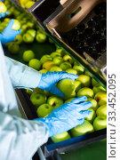 Купить «hands of factory worker checking ripe apples on conveyor belt of sorting production line», фото № 33452095, снято 12 июля 2020 г. (c) Яков Филимонов / Фотобанк Лори