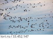 Купить «Flock of cranes flying in sky», фото № 33452147, снято 1 июня 2020 г. (c) Яков Филимонов / Фотобанк Лори