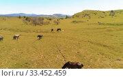 Купить «Flight over wild horses herd on mountain meadow. Summer mountains wild nature. Freedom ecology concept.», видеоролик № 33452459, снято 28 июля 2018 г. (c) Александр Маркин / Фотобанк Лори