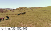 Купить «Flight over wild horses herd on mountain meadow. Summer mountains wild nature. Freedom ecology concept.», видеоролик № 33452463, снято 27 июля 2018 г. (c) Александр Маркин / Фотобанк Лори